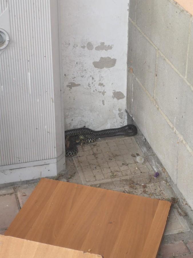 Serpenti e caprioli, ancora interventi per il Centro Animali Non Convenzionali di Grugliasco