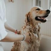 Il cane con la piega, la padrona no. Parrucchieri ed estetisti: fateci aprire
