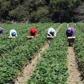 Lavoro e agricoltura, appello del Piemonte alle altre Regioni: il nuovo voucher va rivisto per favorire imprese e lavoratori