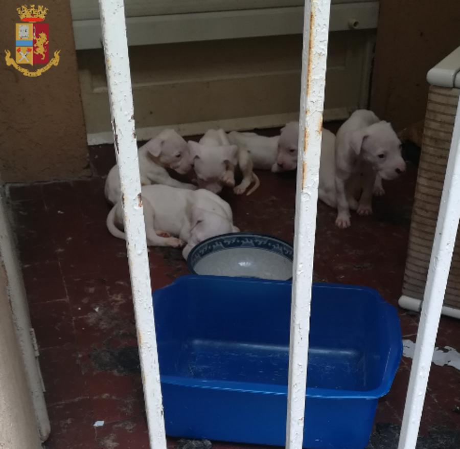 10 cani da giorni senza cibo né acqua lasciati su un balcone: salvati dalla Polizia