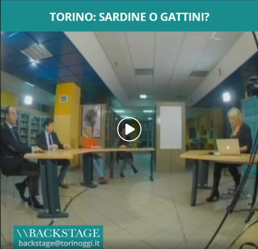 Torino: sardine o gattini?