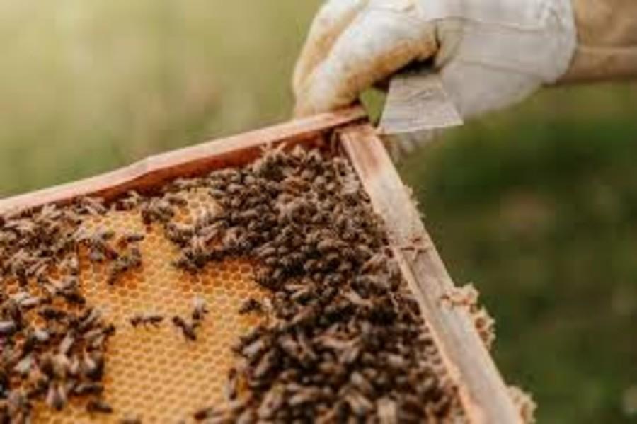 Gli eventi climatici estremi fanno male alle api: addio a 1 vaso di miele su 4