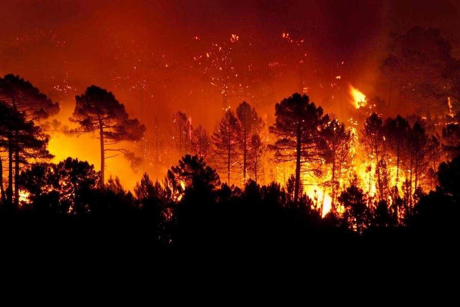 L'aumento della CO2 è colpa della deforestazione selvaggia, non delle auto diesel. Di Giuseppe Chiaradia*