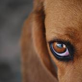 Cane abbandonato senza acqua nè cibo su un balcone salvato dai vigili