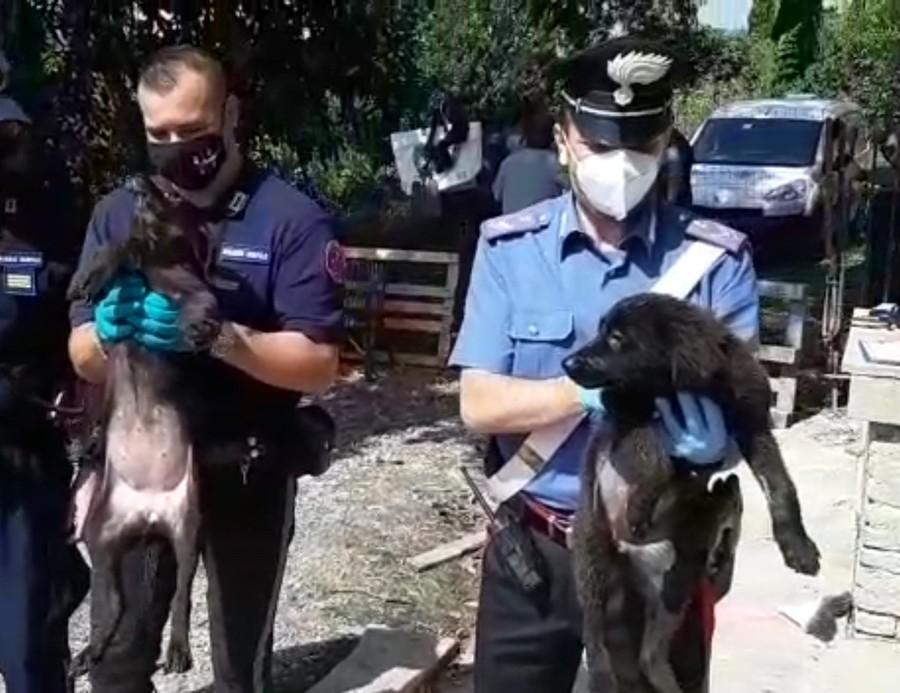 Chieri (TO), sedici cani abbandonati in un canile abusivo, carabinieri denunciano la proprietaria